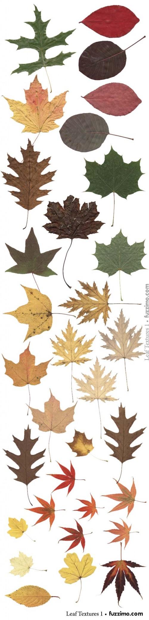 fzm-Leaf-Textures-02