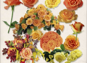 Freebies Kit of Autumn color Roses